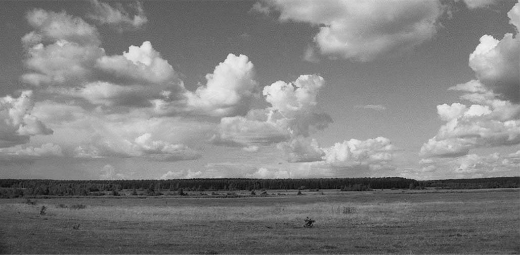 Житомирське Полісся